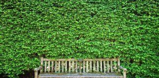 ogrodzenie zielone
